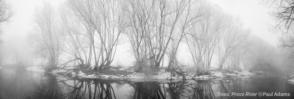 Trees, Provo River